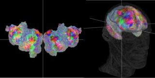 berkeley-neuroscientists-create-amazing-interactive-brain-atlas-en